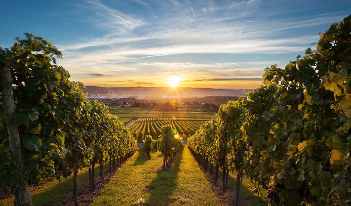 Carmel Road Winery at california