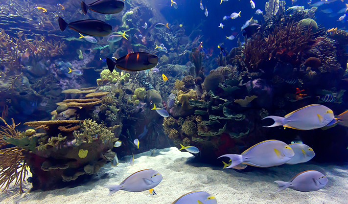 Monterey Bay Aquarium in Carmel