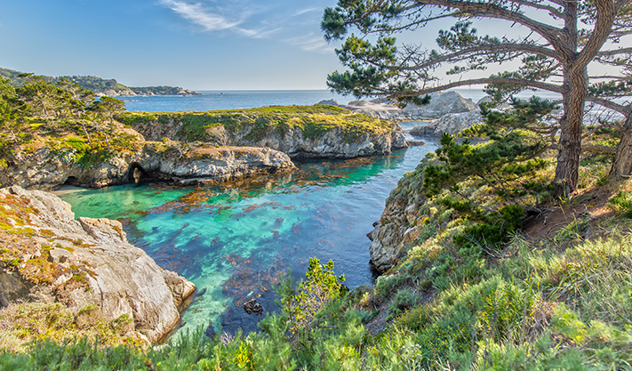 Point Lobos State Natural Reserve in California