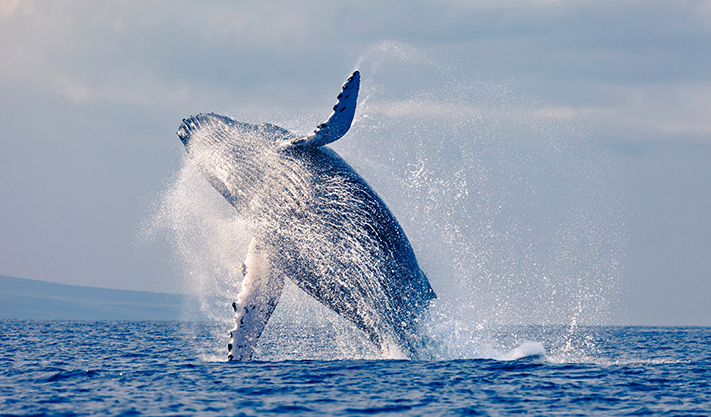 Monterey Bay Whale Watching Package of Carmel Hotel